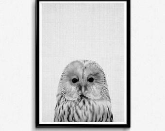 Owl Wall Art, Bathroom Funny Decor, Nursery Wall Art, Baby Nursery Decals, Dorm Room Decor, Woodlands Art Set, Nursery Safari Print, Owl Art