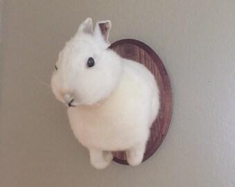 Taxidermy Rabbit Shoulder Mount