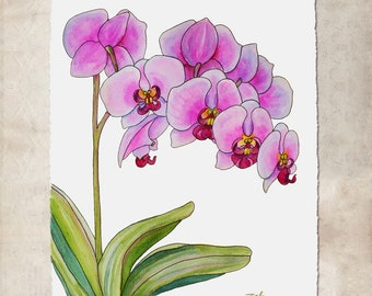 Orchid Painting Original Watercolor and Ink Unframed Wall Art, Hand Painted to Order by Janet Zeh Original Art