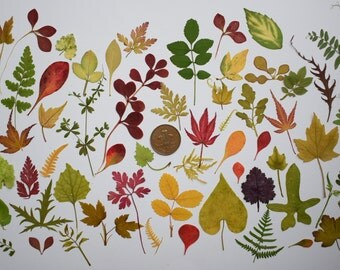 55 Pressed Leaves/Flowers for Card making Scrapbooking art supplies, craft supplies