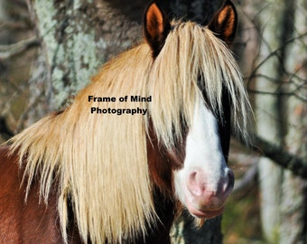 Chincoteague Wild Pony Photo - Riptide, Born 2009 & King of Assateague