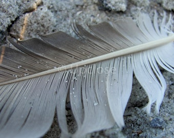 Feather Print, Feather Photograph