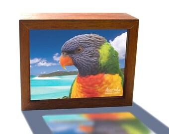 Rainbow Lorikeet Whitsunday Island Australia
