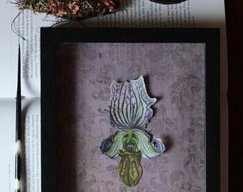Lady Slipper Orchid Shadow Box