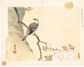 "1894, Japanese Woodblock print, antique, Matsumura Keibun, ""Dusky thrush"""