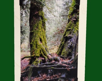 BLANK CARD, photo note card, birthday card, forest Decor, handmade, special occasion, old growth forest trees, wall art, ENCHANTED forest