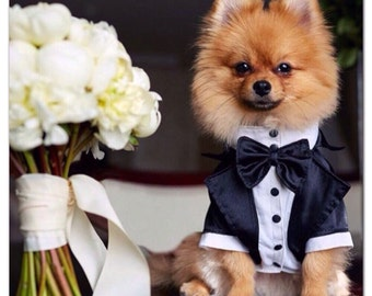 Wedding tuxedo for dogs Formal dog tuxedo Custom made dog suit