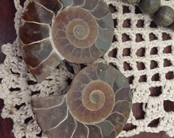 Ammonite Pair, Ammonite Fossil Pair, Ammonite Fossils, Ammonite, Feng Shui, Good Luck, Protection, Health, Wealth, Stability