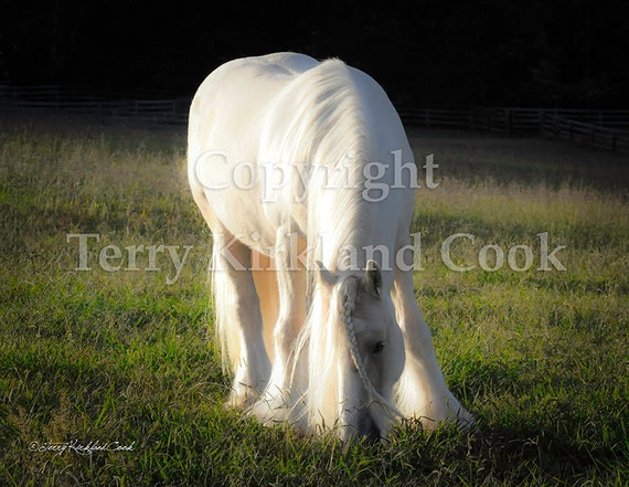 White Gold ~ Copyrighted Photograph by Terry Kirkland Cook