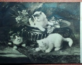 Antique Russian cat photo postcard 1900s. Kittens are afraid of large beetle. Edwardian. Charming puzzled fluffy kittens. By YBER. Crimea.