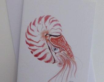Painted Nautilus, blank greeting card, Birthday card, thank you card, gift card, ocean card