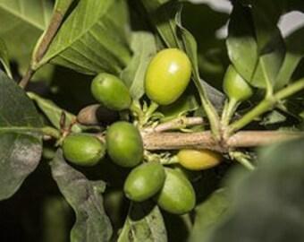 Coffee Essential Oils for Nausea & Fever