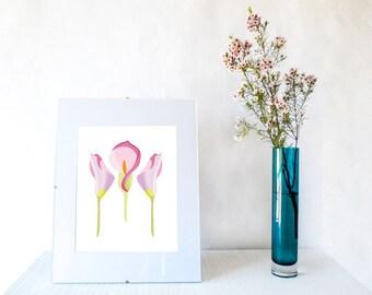 Lily flower digital print, instant download, 8x10, home decor, flower digital print, Lily flower print