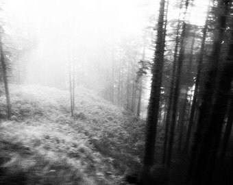 Into the Forest, Swiss Alps Black & White Photographic Print in Mount