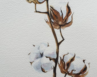 "Original watercolor painting "" Cotton"", Botanical illustration, Wall Art"