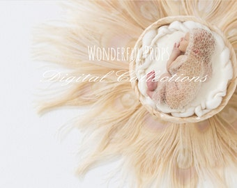Digital Newborn Photography Cream Feathers Nest Prop Backdrop -SET of 4 Pictures as shown