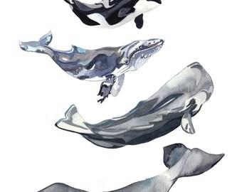 Whale A4/A3 Art Print