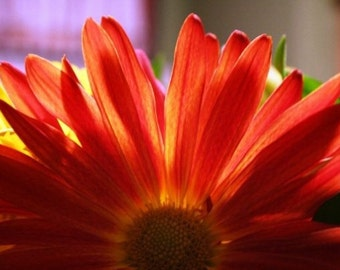 Orange/Red Flower-print only