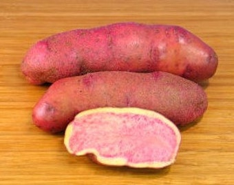 1 lb Blossom Fingerling SEED POTATOES