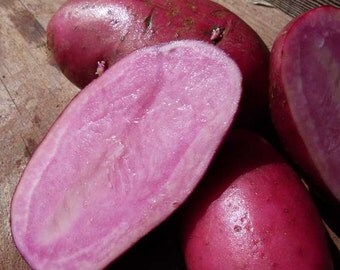 1 lb All Red SEED POTATOES