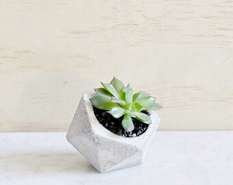 Mini Icosahedron Concrete Succulent Planter