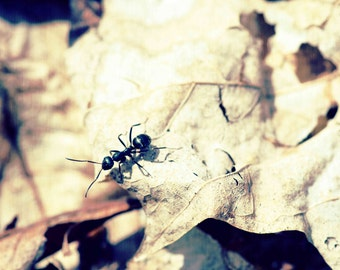 Ant on Leaf in Autumn