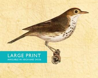 Vintage Bird Brooklyn Map Print Antique Bird Print Vintage Bird Prints illustrated bird print Bird wall decor natural history wall art