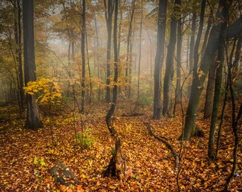 Foggy Autumn Walk Canvas