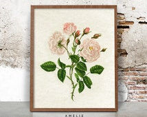 Printable Botanical Flower Print, Vintage Rose Flower Wall Art, French Country Cottage, Shabby Chic Decor, Botanical Rose Illustration