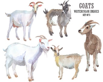 Goat clipart Watercolor clipart Animal clipart