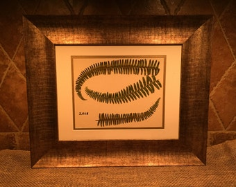 Framed botanical - ferns