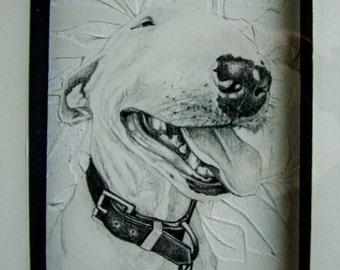 The english bull terrier.