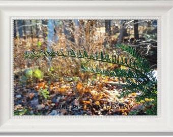 Spruce Tree Print, Green Spruce Prints, Nature Prints, Nature Printables, Nature Art Prints, Nature Wall Art, Nature Wal Decor, Nature Art