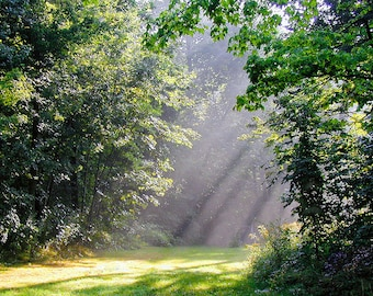 MORNING LIGHT, inspiration wall art, nature photography, landscape photography, trees, fog, sun beams, sun rays,misty, trees, wall art decor