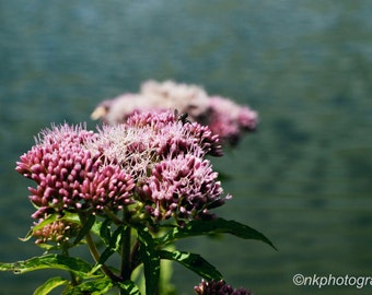 Nature Flower Photograph Print 6x4 or A4