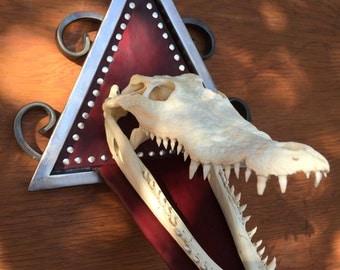 Industrial Freshwater Crocodile Skull Mount. The Bizarre, Oddities & Curiosities.