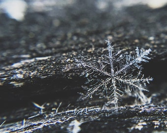 Snowflake Photo - Winter Digital Photo - Grey - Ice Photo - Water - Digital Photo - Digital Download - Instant Download - Living Room Decor