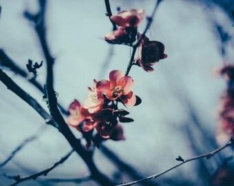 Cherry Blossom - Blossom Photo - Spring - Spring Blossom - Spring Photo - Spring Flowers - Digital Photo - Instant Download - Spring Decor