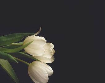 Tulips times two