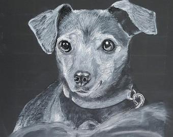Jack Russel Shelter Dog