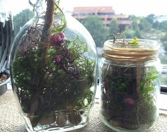 2 Terrariums in Upcycled Jars