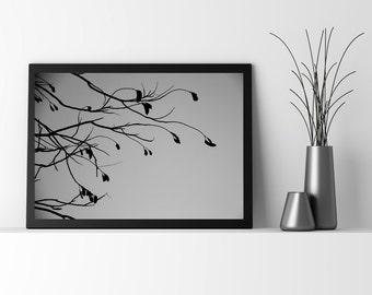 Branches I /fine art photography,Bare Branches, Nature,Fine Art Photography, Winter, Tree, Silhouette, Minimualist Art