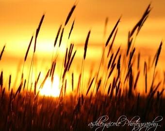 Sunset Photography, Landscape Photography, Nature Photography, Grass Photography, Summer Sunset, Country