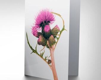 Thistle Card - Scottsh Flower Scotland Pretty Pink Blank Greetings Card CP155