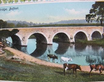 Shaw's Bridge River Postcard / unposted / Grazing cows by river postcard / shamrock postcard / Philco publishing / Bridge postcard