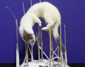 Taxidermy ermine and field mouse on snow