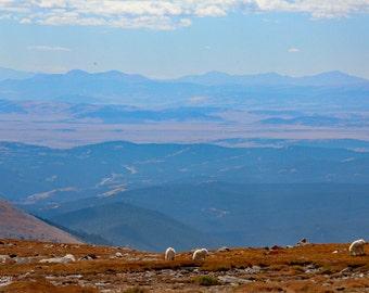 Mountain Goats on Horizon