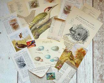 Birds Scrapbook Embellishments , Bird Paper Pack , Junk Journal Supplies , Paper Bird , Nature Journal ,  Die Cut Bird , Vintage Ephemera