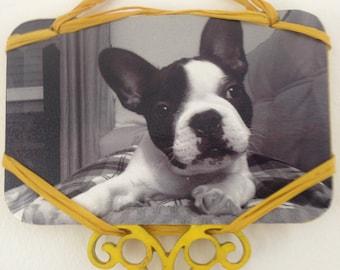 My Pet Frame