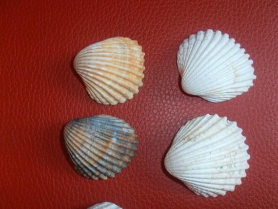 Vintage sea shells set 6 large scallop sea shells nautical for Large seashells for crafts